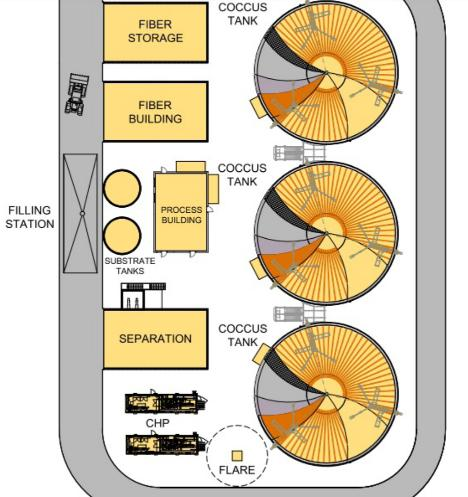 Bioferm: COCCUS picture