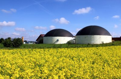 promote electricity produced from biogas in France