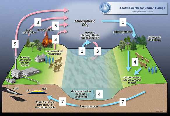 Short carbon cycle of biogas