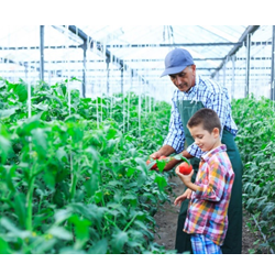 Black & Veatch - Sustainable Solutions - a man and a child in a greenhouse collecting vegetables